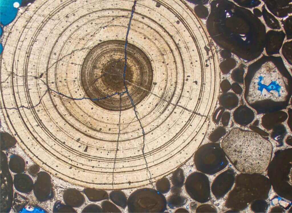 Thin section of a grainstone comprising dense concentrically-laminated cryptmicrobial nodules ('micro-cyanoids) which typically form in stressed depositional settings.  Beleminite indicates marine influence. Upper Jurassic, offshore Dubai