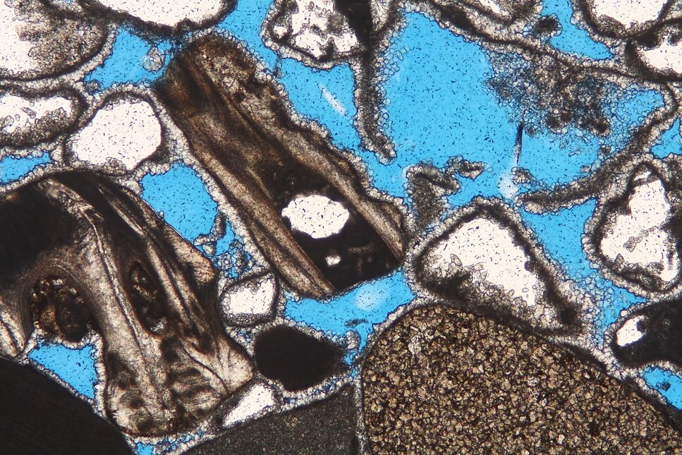 Thin section containing barnacles and (leached) molluscan debris, accompanied by intraclasts.  This distinctive biofacies is typical of high-energy rocky shoreline settings. Sub-Recent sample, eastern Arabia